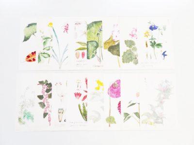 京都府立植物園オリジナルグッズ販売開始!   株式会社サンエムカラー
